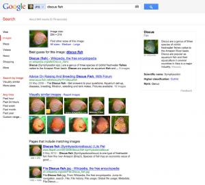 recherche dimages google
