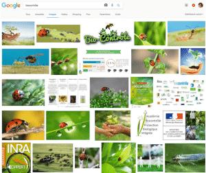 """Recherche avec le terme """"biocontrôle"""" sur Google Images"""